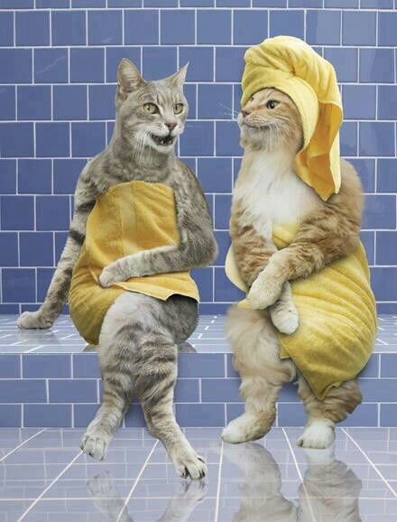 CAT SUPERSTITIONS FROM AROUND THE WORLD