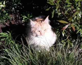 Teddington cat groomer