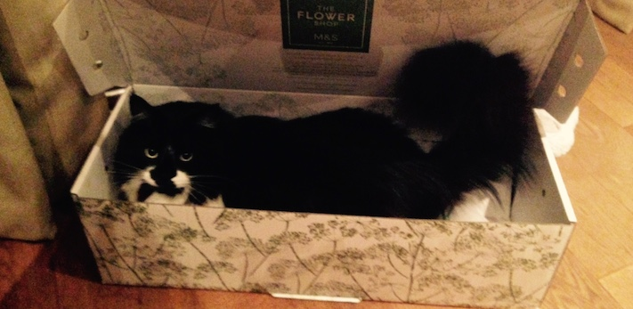 Balham cat groomer