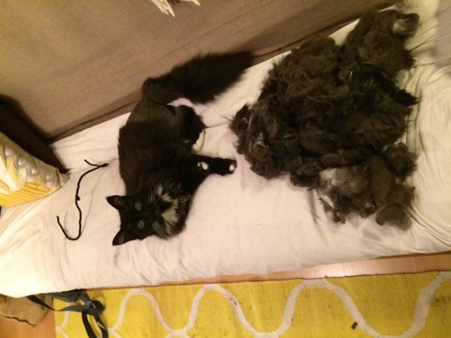 East London cat groomer feedback