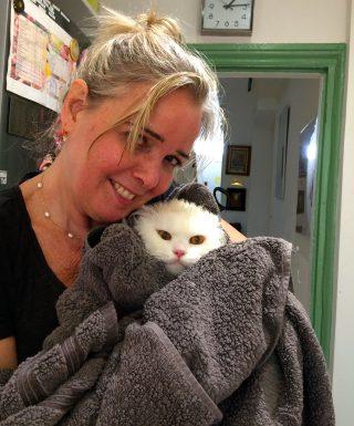 Kensington cat groomer