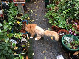 cat grooming Mitcham