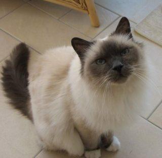Kings Road Mobile cat grooming