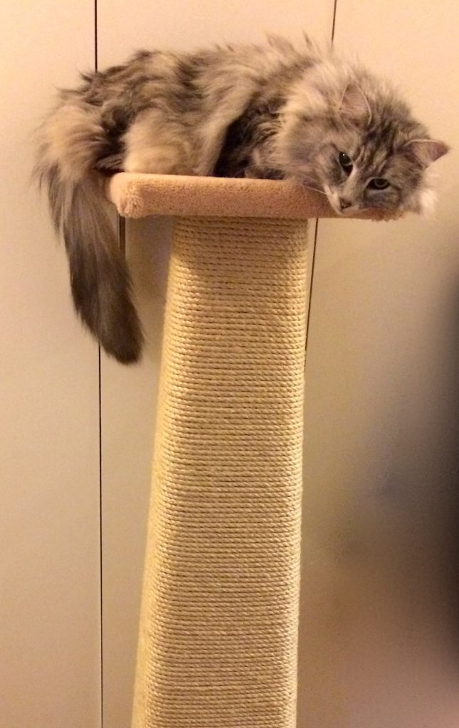 review of kalven cat scratchers by Anita Kelsey